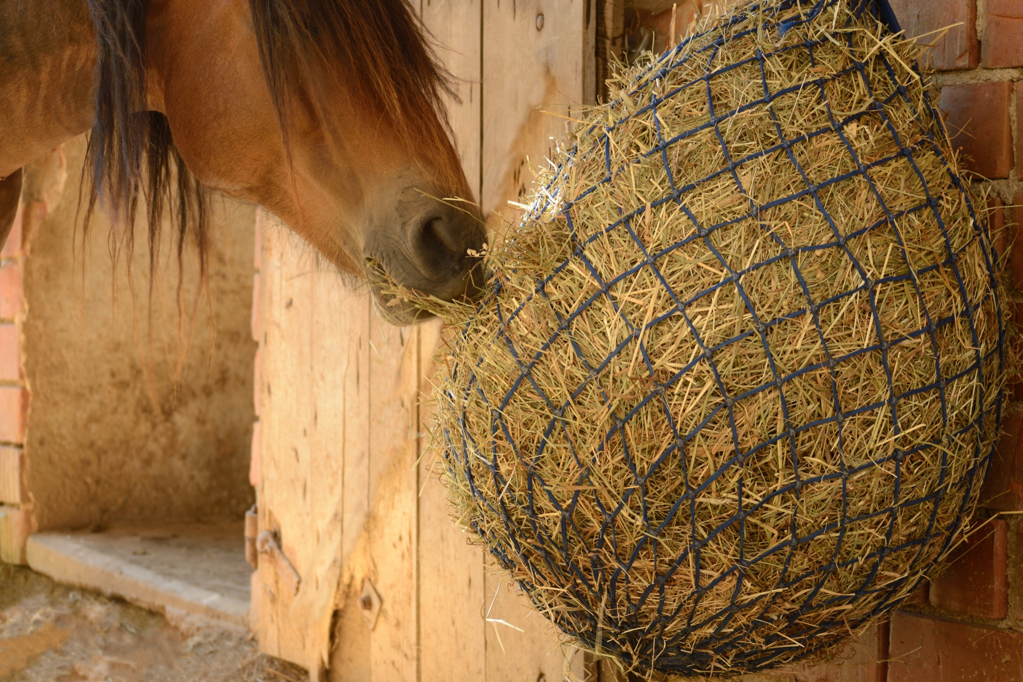 A horse protecting its teeth eating from a slow feed hay net