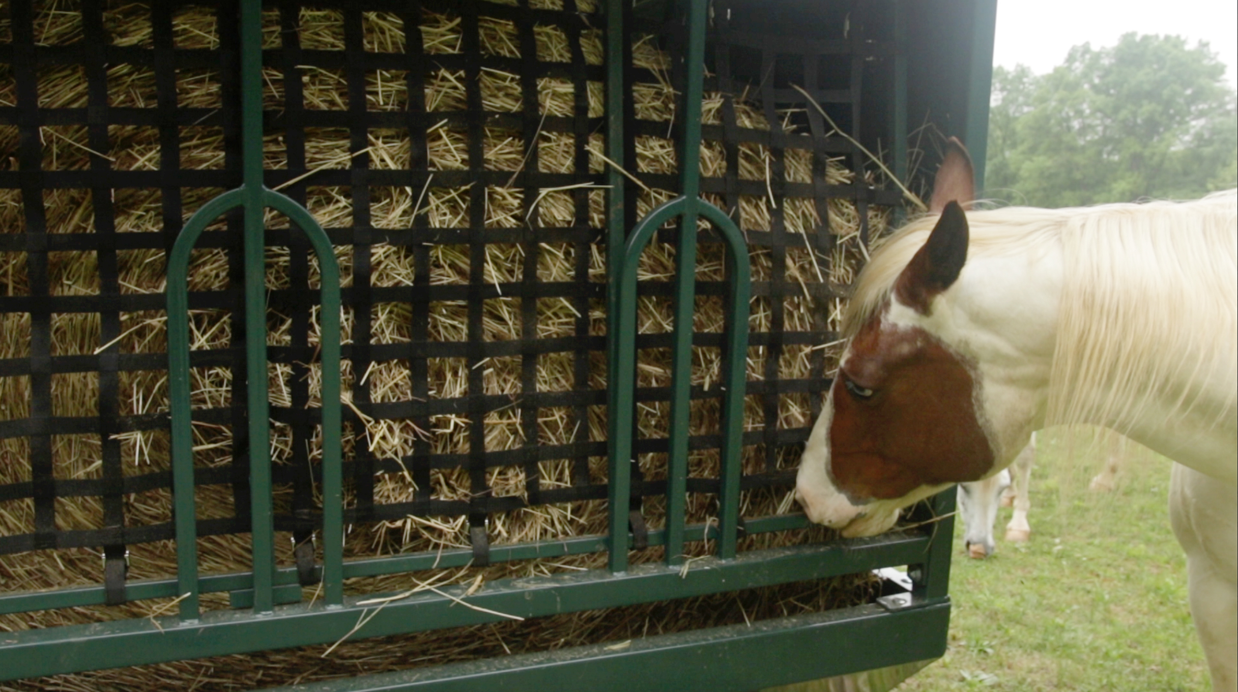 horses protecting teeth while eating from slow feeder copy