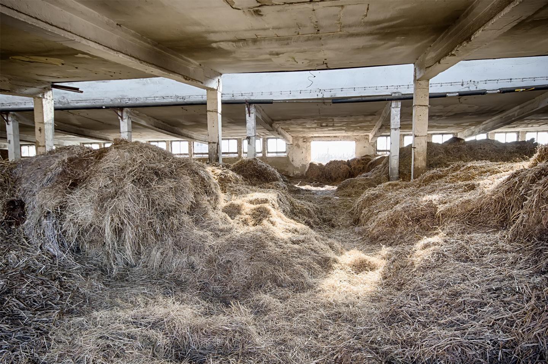 moldy hay