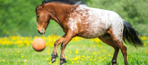 horse with ball 1